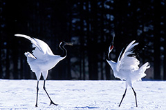 Japanese Crane National Park
