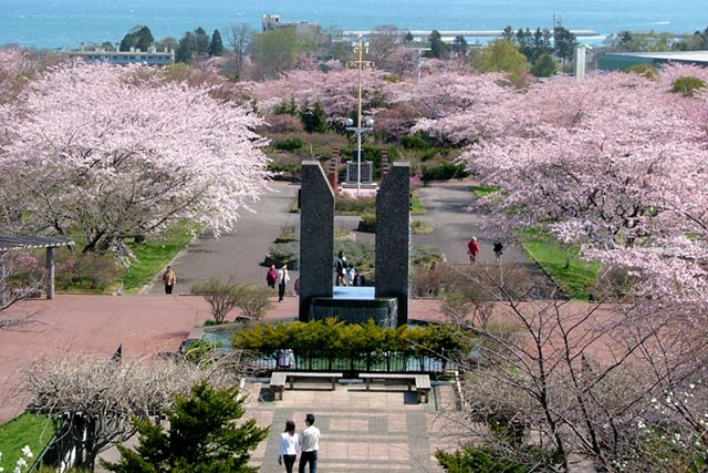 Cherry blossoms in Oniushi Park