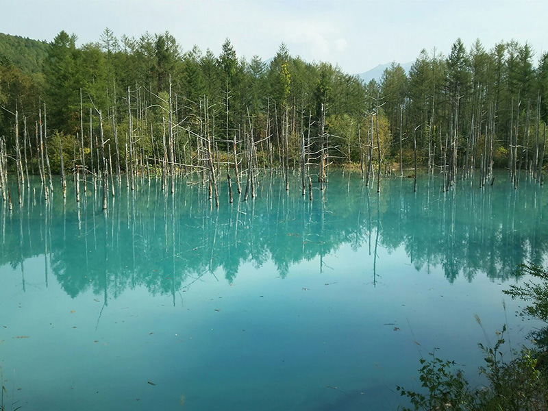Shikisai-no-Oka, Blue Pond and Biei Tour
