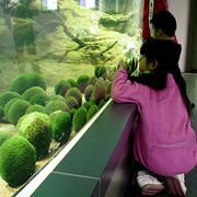 Marimo (Lake Moss Ball) Exhibition and Observation Center